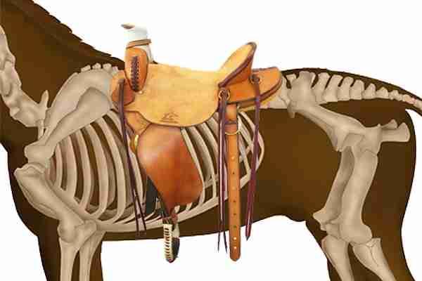 Saddle Length Western Saddle