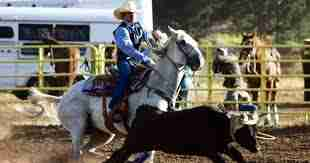 New Mexico State University Study of Western Saddle Fit issues.
